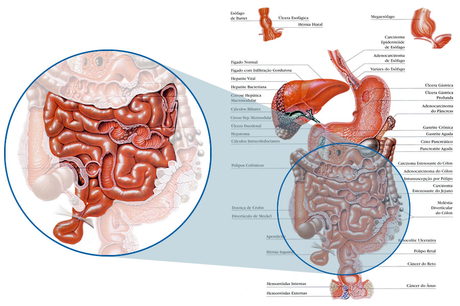 Anatomia do intestino delgado